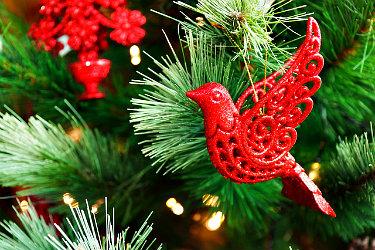 Christmas.Saint Leo University